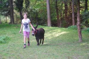 Babyschweine, Esel, Hasen Aug- sept2014 040