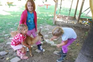 Juli August 2014 GEb.Matteo,Sosanna, Hasen Babyschweine 003