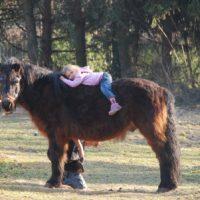 Pony Rambo geb.1990